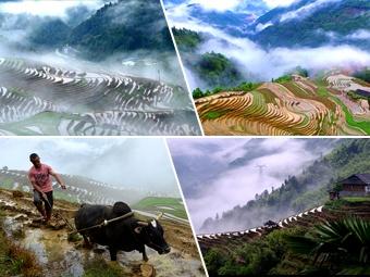 高清:广西龙胜雨后梯田如仙境
