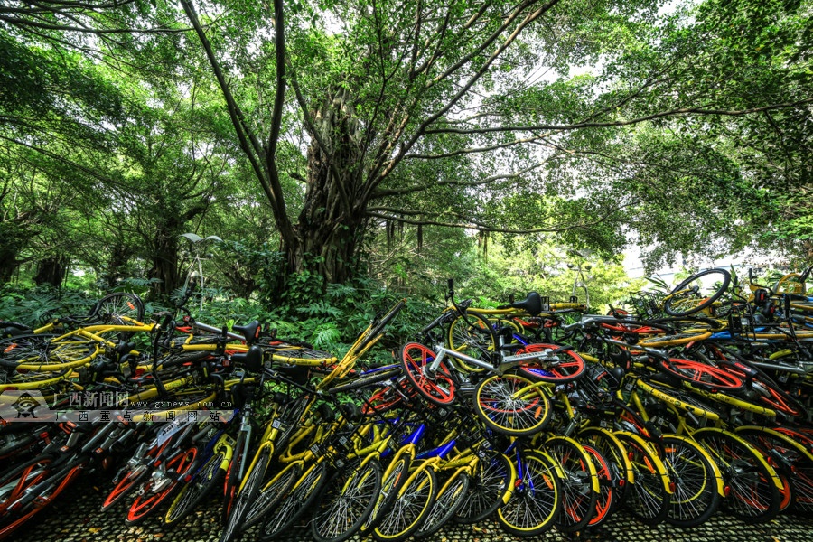 """高清:南宁南湖公园上百辆共享单车""""叠罗汉"""""""