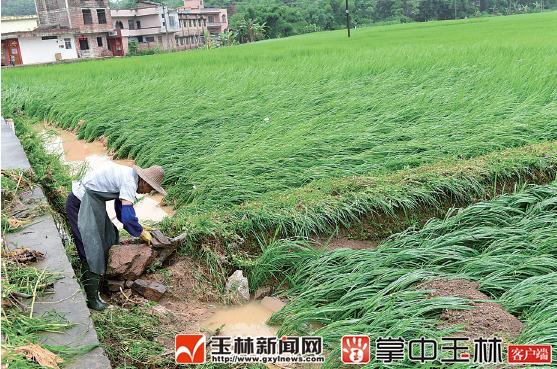 玉林市红豆社区_大暴雨袭击 玉林市致多地受灾(组图)-广西新闻网