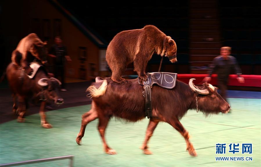 白俄罗斯国家马戏团v国家调用视频接口图片