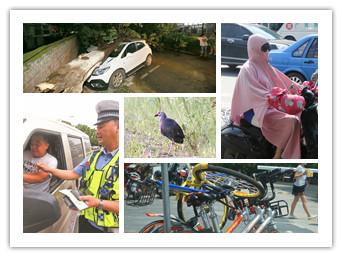 """2日焦点图:""""最美水鸟""""紫水鸡现身北仑河口保护区"""