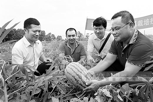广西桂平:木薯套种技术让农民尝到增收甜头
