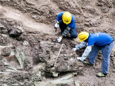 重庆云阳发现世界级恐龙化石群