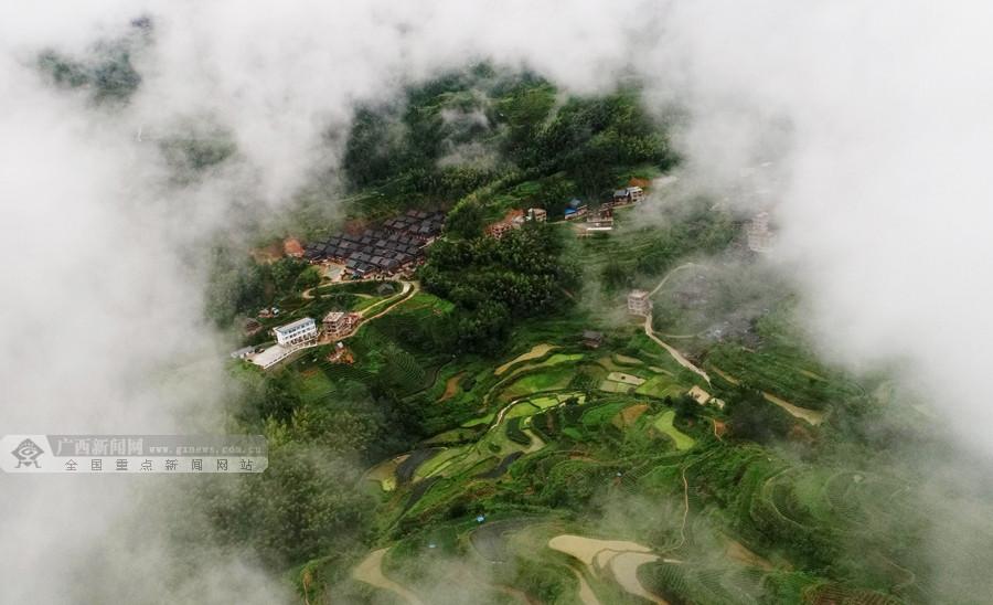"""航拍:探秘三江""""藏""""在云雾下的梦幻茶园"""