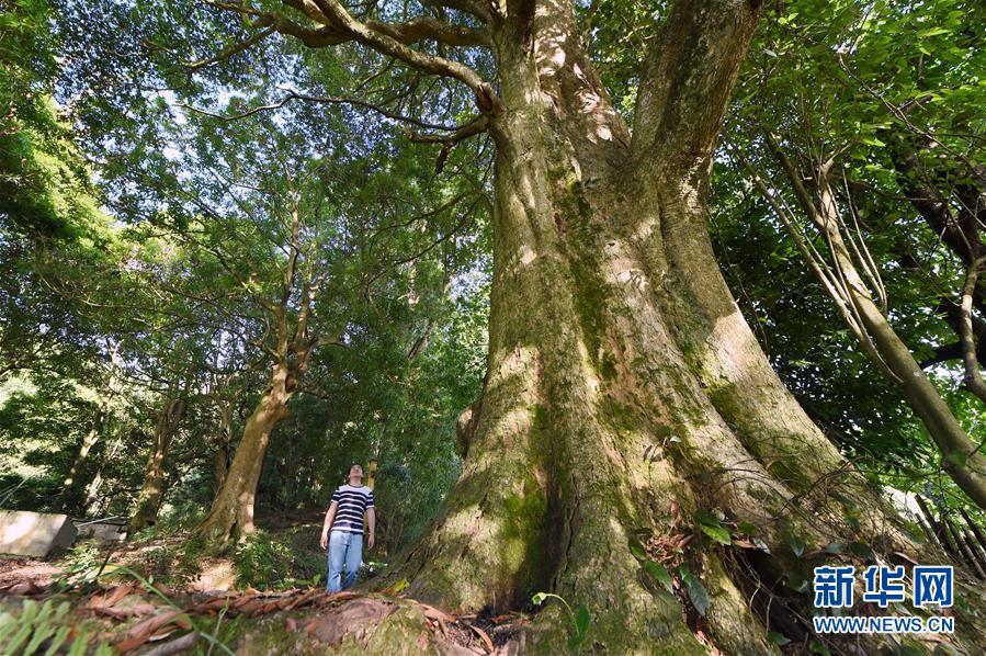 树的根茎结构图