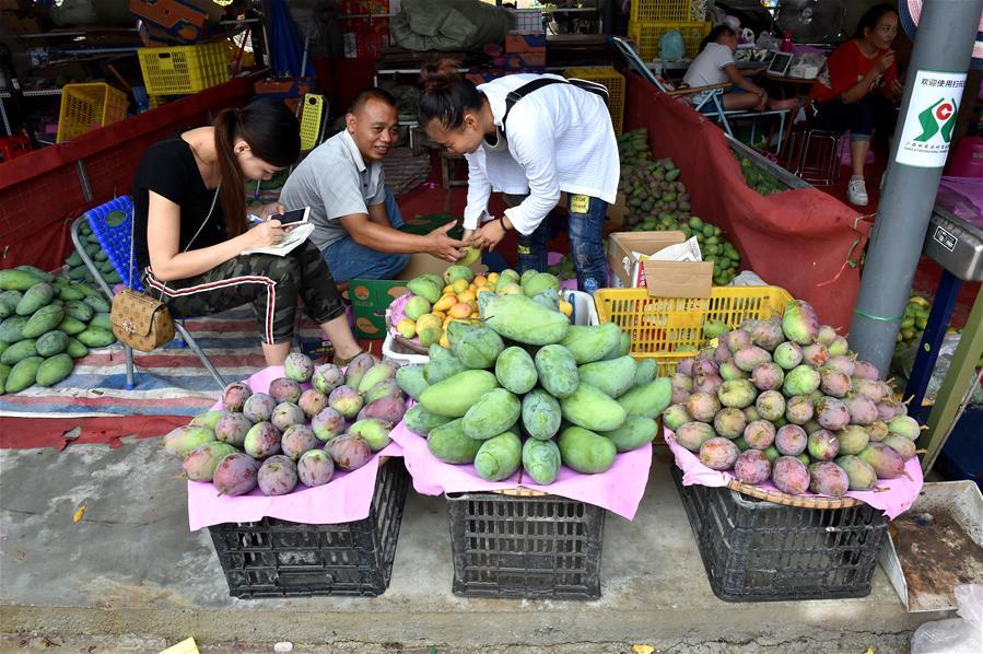 (经济)(1)百色芒果大批量上市