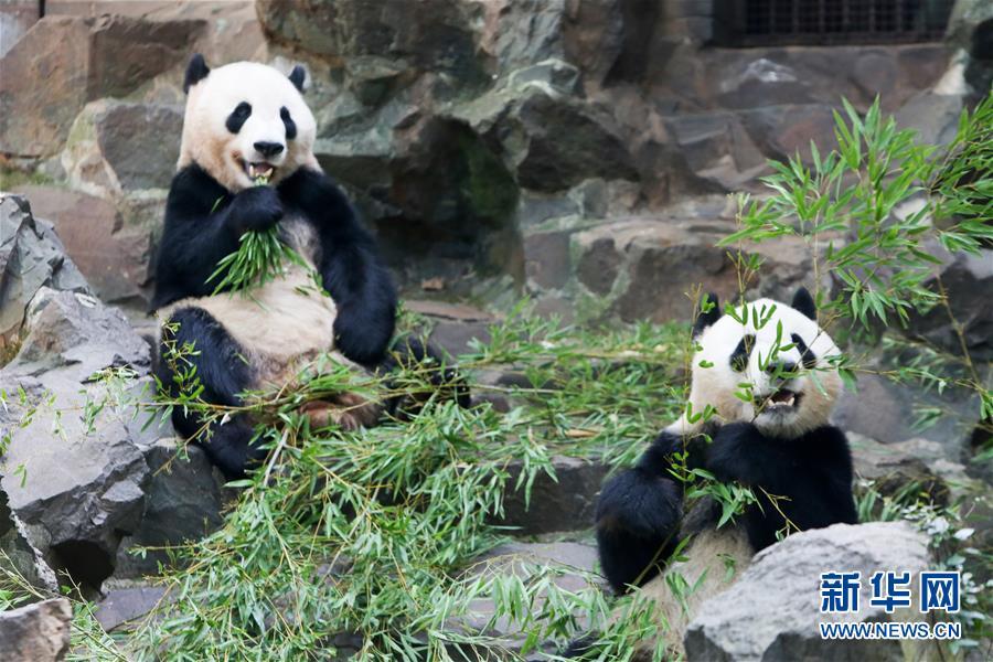 (社会)(1)大熊猫过生日享清凉