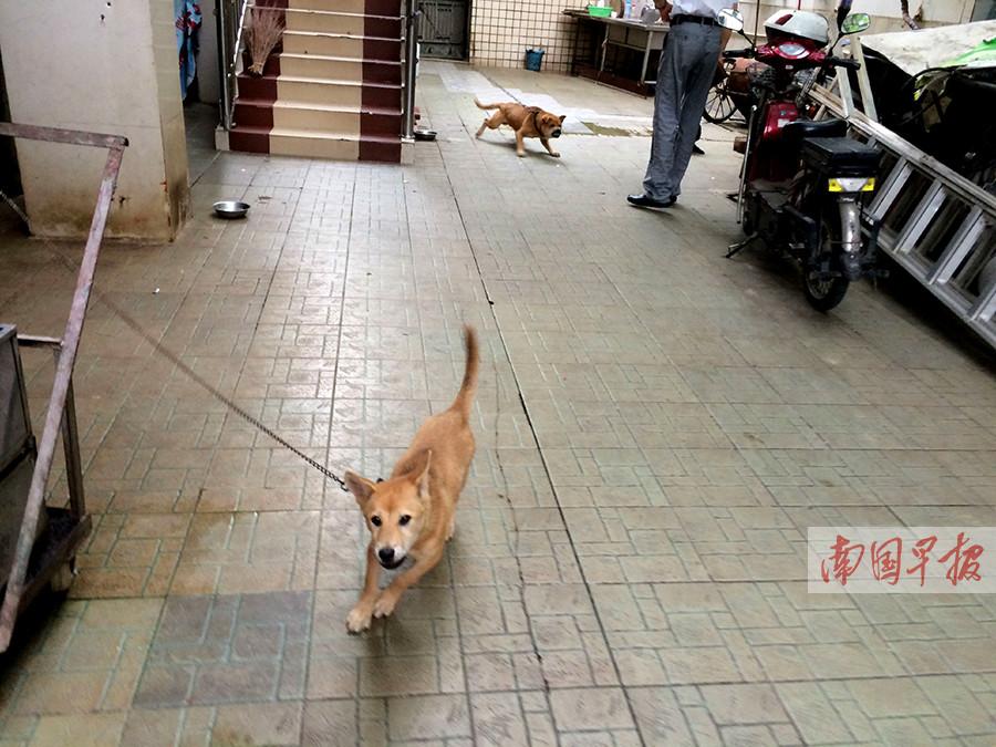 市民办事被狗咬 南宁一办公区养三只狗为防谁?(图)