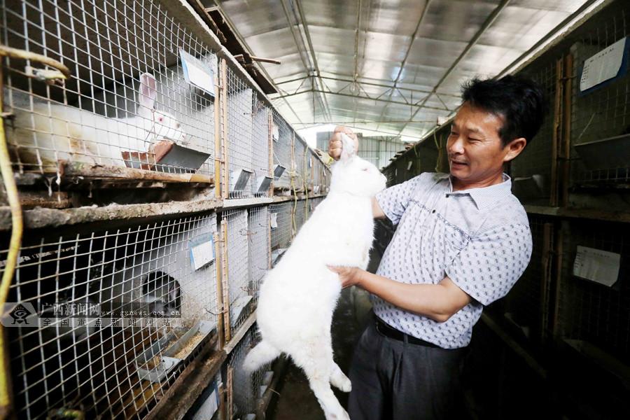 """养兔有""""钱""""途 农户发展肉兔养殖拓宽致富路(图)"""