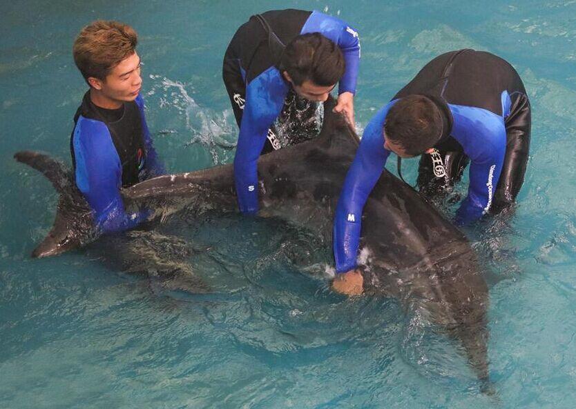 搁浅海豚经救治放归大海