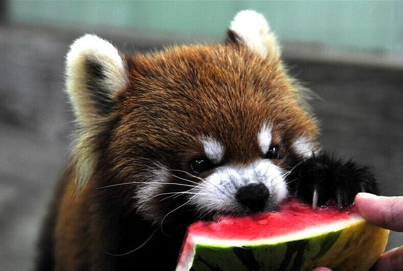 上海:动物享清凉