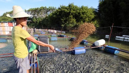 广西融水:合作社里共同养鱼助力精准脱贫