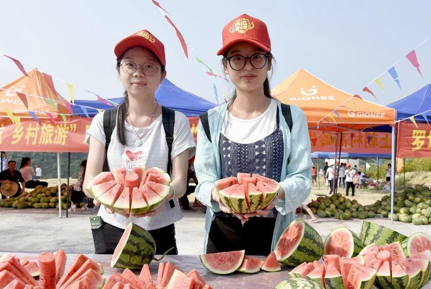 罗城举办西瓜夏令营:近百个家庭摘西瓜吃西瓜(图)