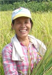 水稻丰收了