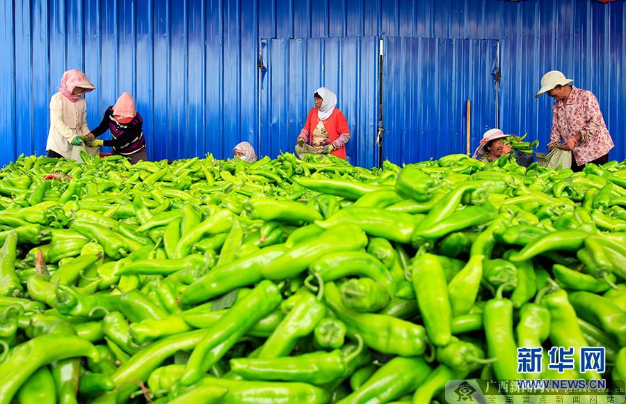 隆德:多措并举发展蔬菜产业 带动建档户脱贫增收