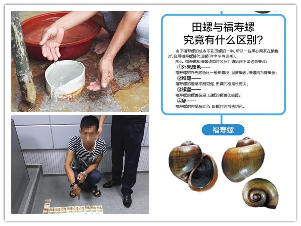 8月8日焦点图:姑娘误食福寿螺流产 教你如何辨别
