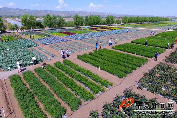 新角度看宁夏之姚磨冷凉蔬菜基地