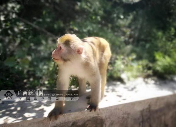 """【2017网络媒体晋城行】走进""""水墨画廊""""蟒河"""
