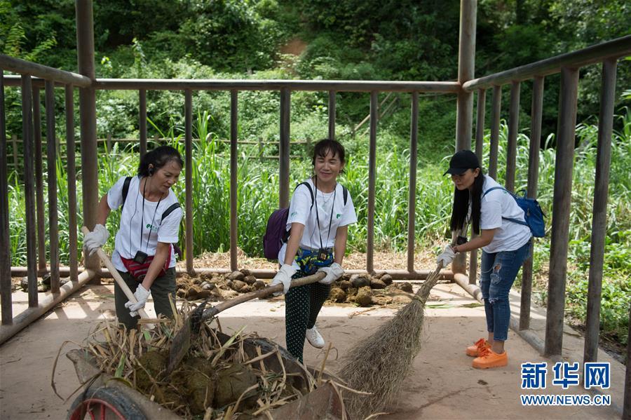 (社会)(4)云南西双版纳举行世界大象日活动