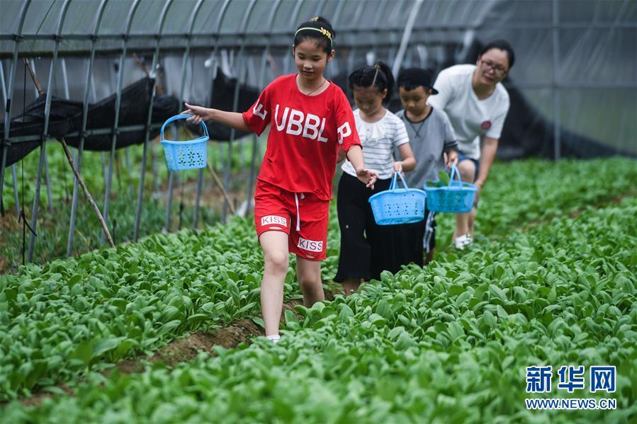 """(经济)(2)美丽乡村打造""""田园超市"""" 生态农场助推乡村旅游"""