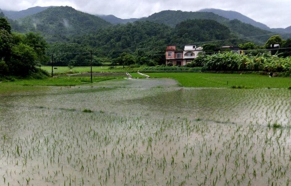 防城港防城区风雨大作 农田被淹围墙倒塌