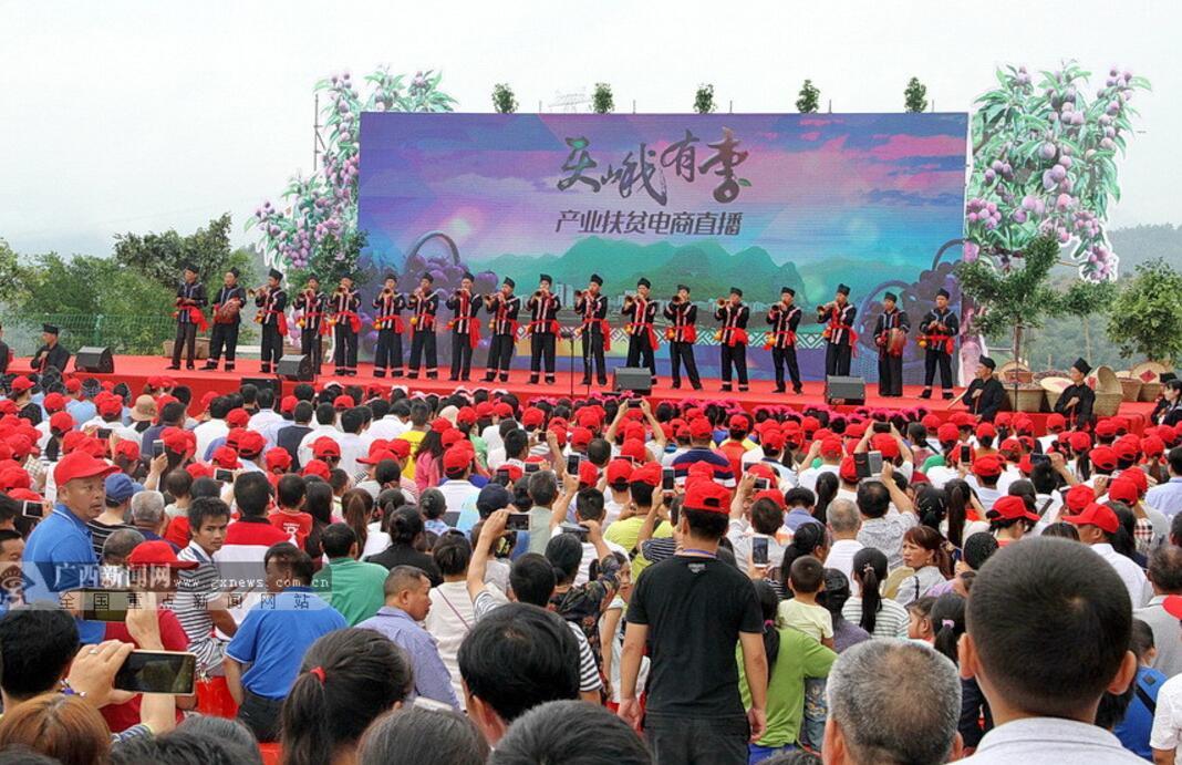 天峨举行2017年龙滩珍珠李节 一日卖出29吨(图)