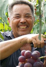 葡萄丰收果农笑