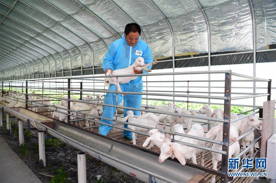 江苏海安:养羊业转型升级催生