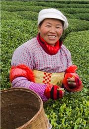 喜笑颜开的茶农