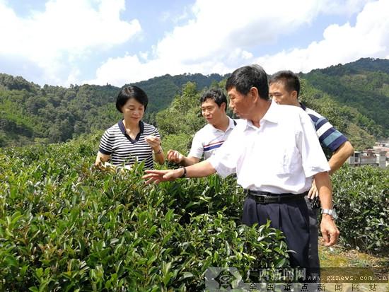 广西两家六堡茶企业通过生态原产地复评