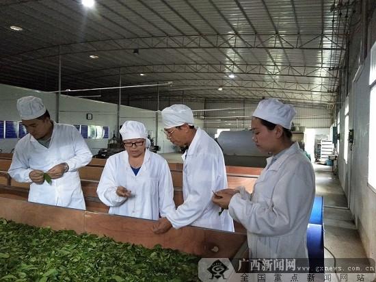 广西西林茶叶通过生态原产地产品保护现场评定