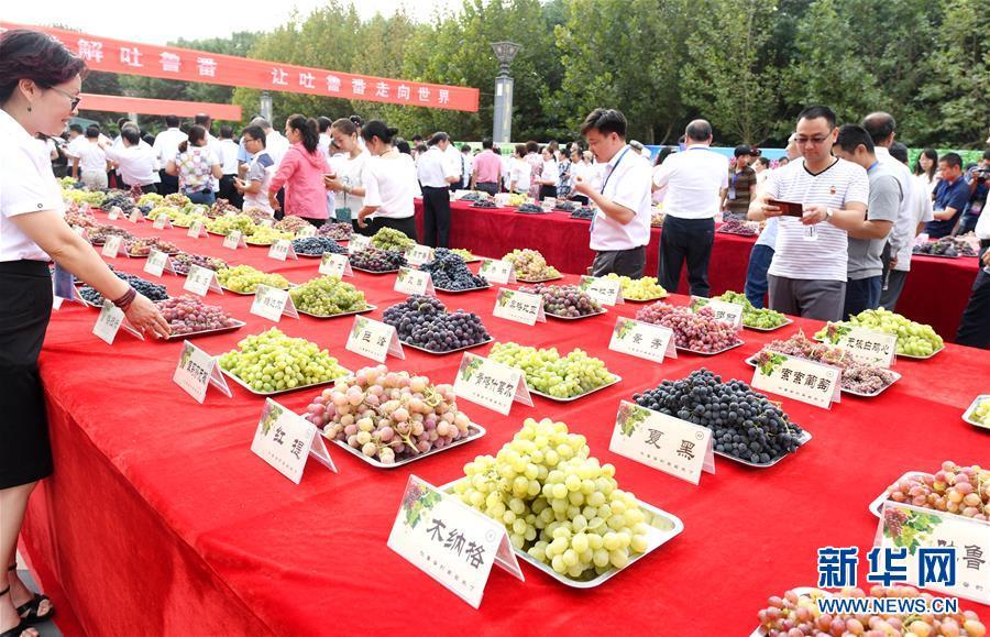 (经济)(1)吐鲁番葡萄节216种葡萄斗艳