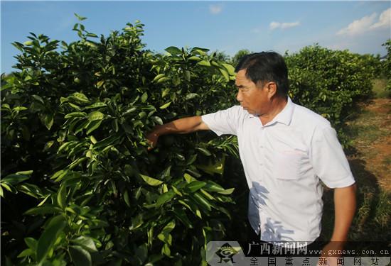 身残志坚 瑞金黄柏乡共产党员邓大庆带领村民同致富