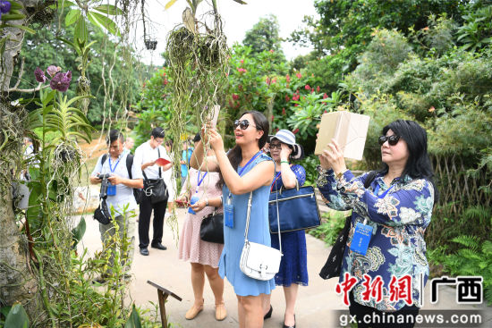 9月4日,海外华文媒体记者在青秀山风景区兰园拍摄兰花。俞靖 sh