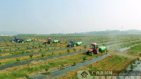 广西首个市级国家现代农业产业园落户来宾
