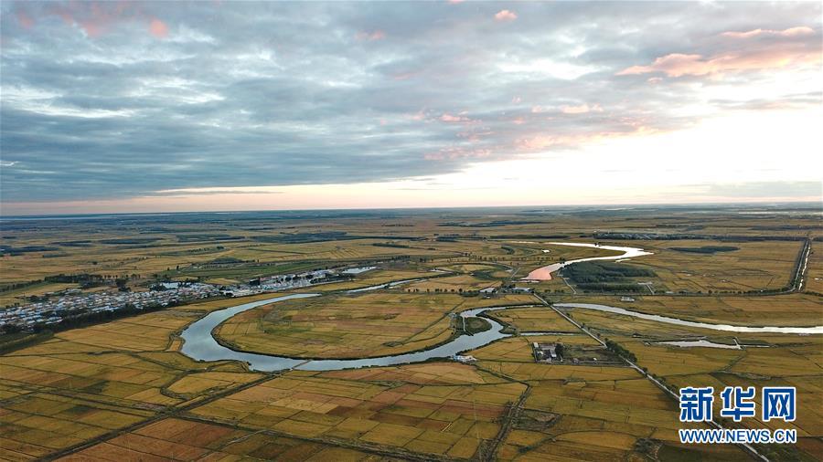 这是在吉林省白城市镇赉县大屯镇拍摄的稻田(9月12日摄)。   近日,记者在吉林省水稻主产区白城市看到,大片稻田已经金黄,即将进入收割期。吉林省白城市充分利用引嫩(嫩江)入白、大安灌区、洮儿河灌区等地上水资源扩大水稻种植面积,2017年白城市水稻种植面积超过200万亩。   新华社记者 张楠 摄