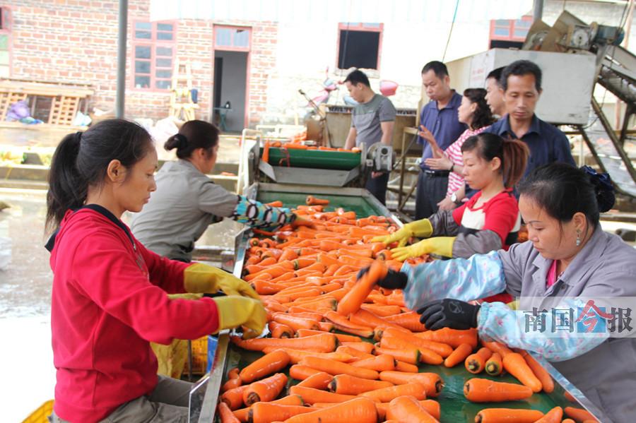广西首个市级国家现代农业产业园花落来宾
