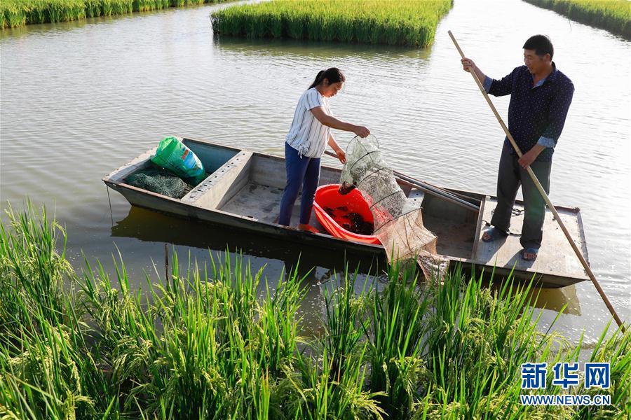 #(经济)(1)虾稻共生收入增