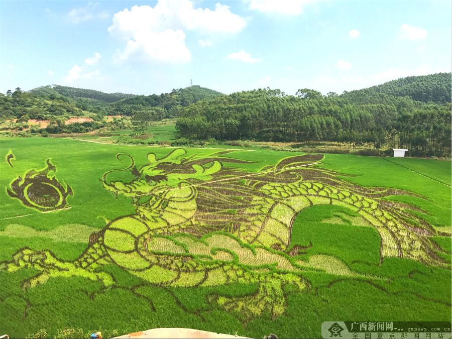 宾阳古辣稻田艺术文化节将从10月1日国庆节开幕 持续到11月30日