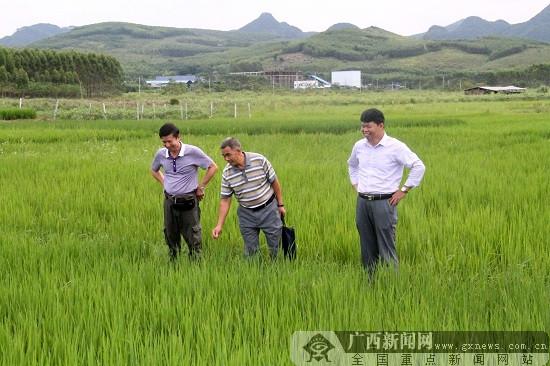 发挥富硒优势 引领农户脱贫致富