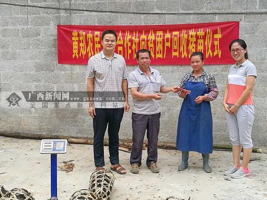 岩滩镇:合作社向贫困户回收猪苗 助力脱贫攻坚