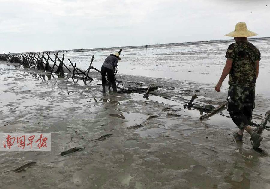 违法占海养殖 合浦2000多亩滩涂上占海设施被清理