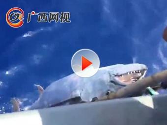 长1.73米重180斤!一市民钓到超大金枪鱼