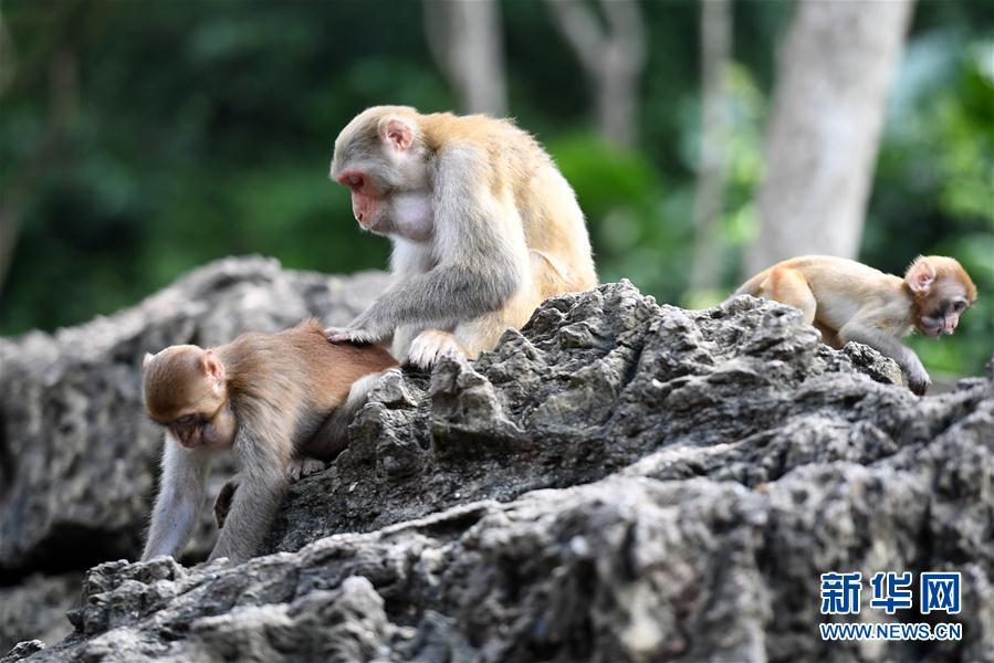 (环境)(1)山清水秀猴子乐