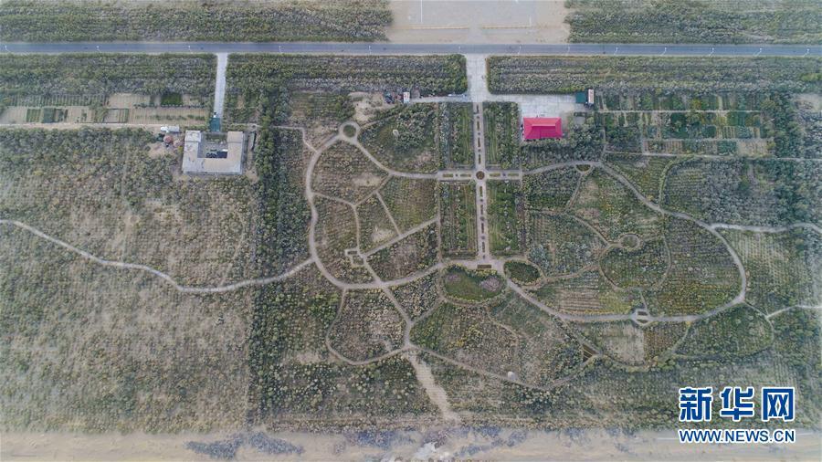 塔克拉玛干沙漠腹地的塔中沙漠植物园(9月22日摄)。建园10多年来,科研人员先后从国内外引进400多种植物。经过培育,有200余种荒漠植物保存了下来。 塔里木盆地位于新疆维吾尔自治区南部,是我国面积最大的内陆盆地。盆地中部的塔克拉玛干沙漠是世界第二大流动沙漠,位于盆地边缘的绿洲长期面临流沙侵袭,生态系统脆弱。近日,记者在地处塔里木盆地南缘的且末、于田、策勒等县看到,经长期治理,当地的森林覆盖率得到提高,风沙危害减轻,绿洲面积得到适度拓展,一些以沙漠为平台的产业已经落地。人们在探索与沙漠和谐共处的过程中,