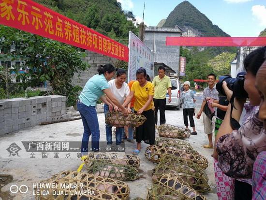 """大化""""金绣球""""农家乐示范点助推15户群众脱贫"""