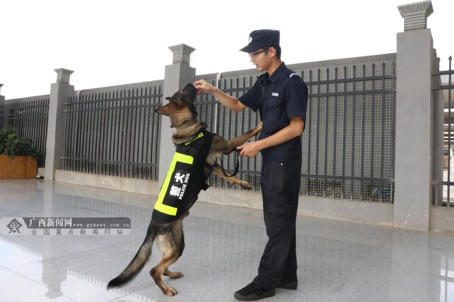 """探秘警犬新兵""""虎子""""的国庆:日巡十公里(组图)"""