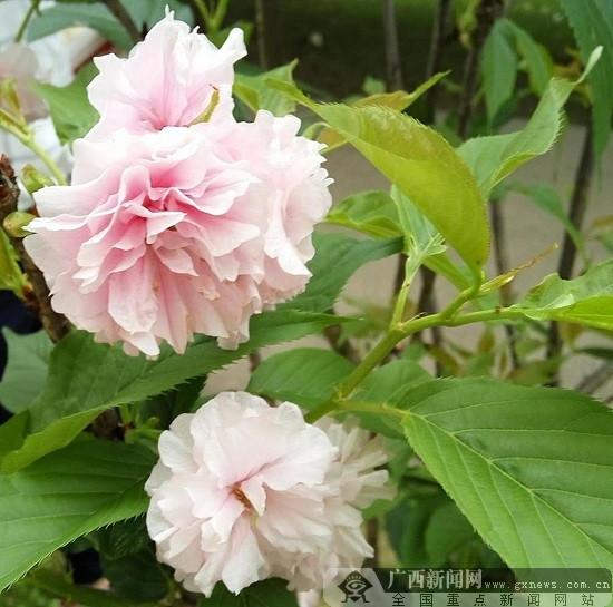 人生如花:花开花谢花凋零,人来人离人远行
