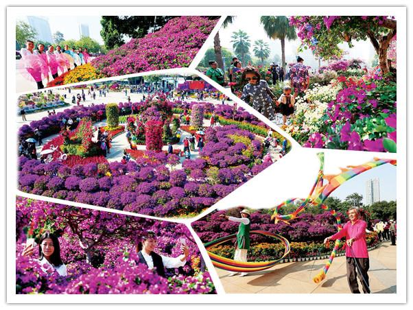 高清:柳州市首届三角花展举办 姹紫嫣红闹深秋