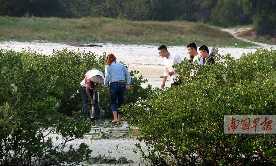 北海22亩红树林濒临消亡 网友发帖呼吁保护(图)